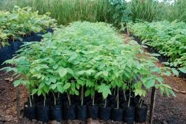 Recursos Florestais (2)