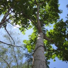 Recursos Florestais (4)