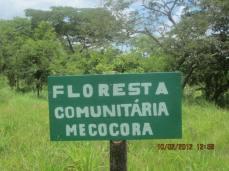 Floresta comunitaria